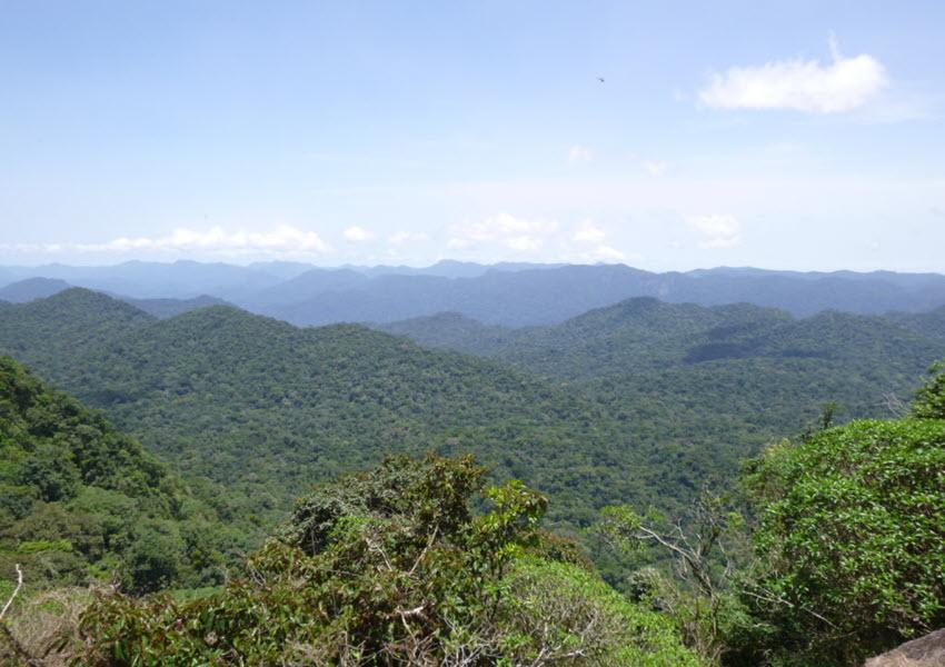 Massif forestier d'Ebo : 68.386 hectares classés dans le domaine permanent de l'Etat
